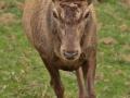 cervol1