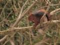 esquirol1