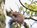 esquirol2