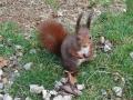 esquirol3