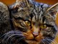 gat-salvatge-mollo-parc-1
