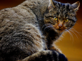 gat-salvatge-mollo-parc-3