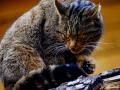 gat-salvatge-mollo-parc-4