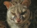 gat masquer