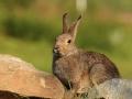 conill mollo parc