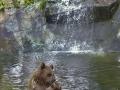 oso pardo mollo parc 12