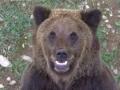 oso pardo mollo parc 15