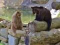 oso pardo mollo parc 17