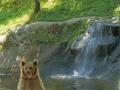oso pardo mollo parc 3