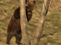 oso pardo mollo parc 6