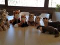 animals-mollo-parc4