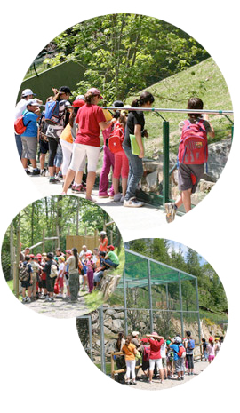 visites-escolars-mollo-parc
