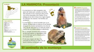 Marmots molló parc