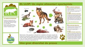 llop-mollo-parc