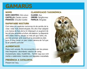 GAMARUS-mollo-parc