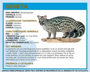 RÈTOL GENETA.fh11