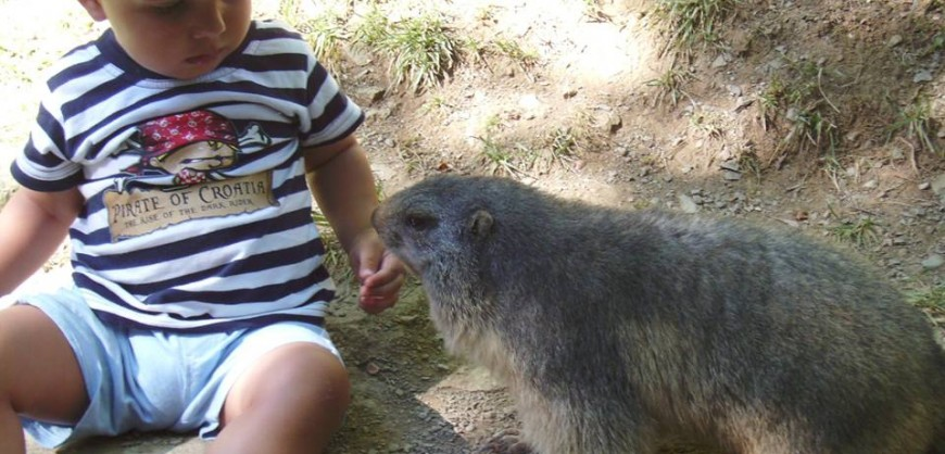 Marmotes Molló Parc