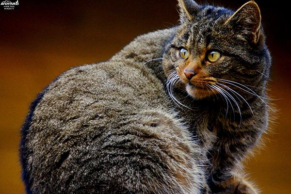 gat-salvatge-mollo-parc-2