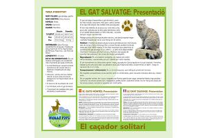 gat-salvatge-mollo-parc